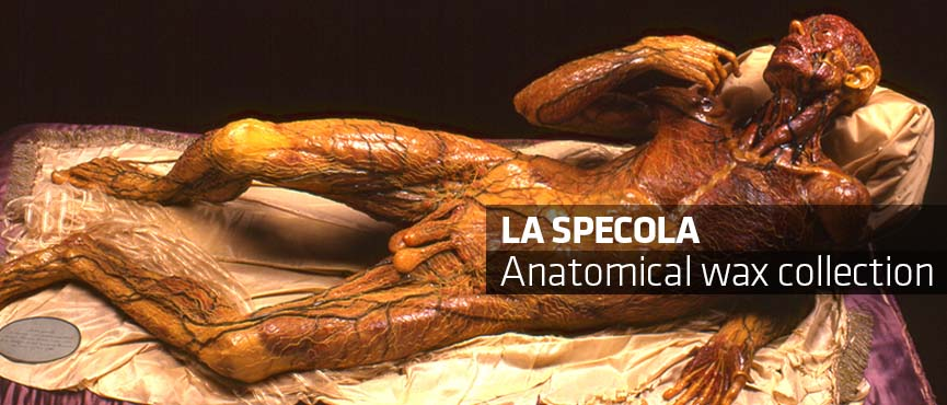 Anatomical wax collection