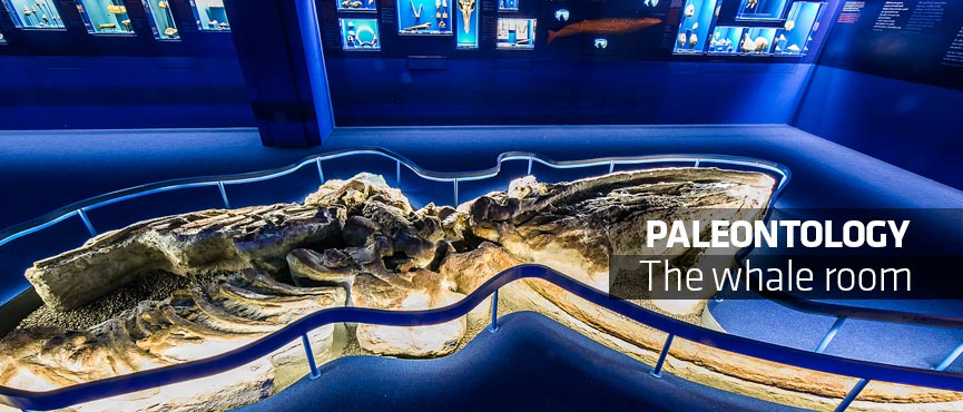Paleontology | The Whale Room