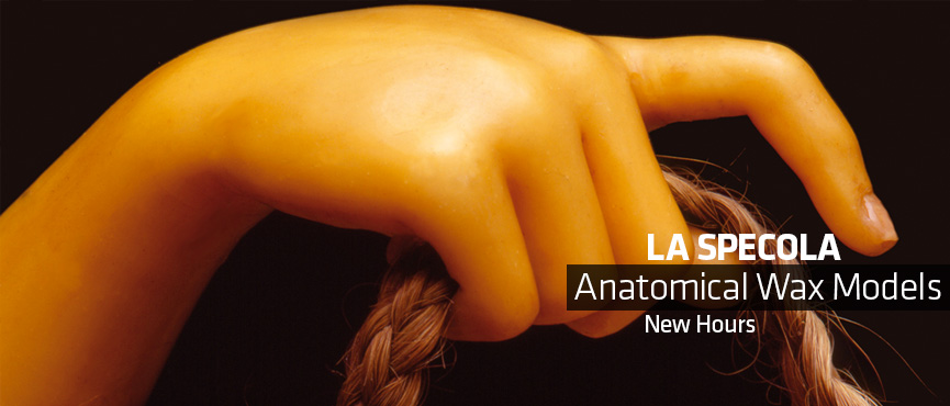 'La Specola' Anatomical Wax Models. New Hours